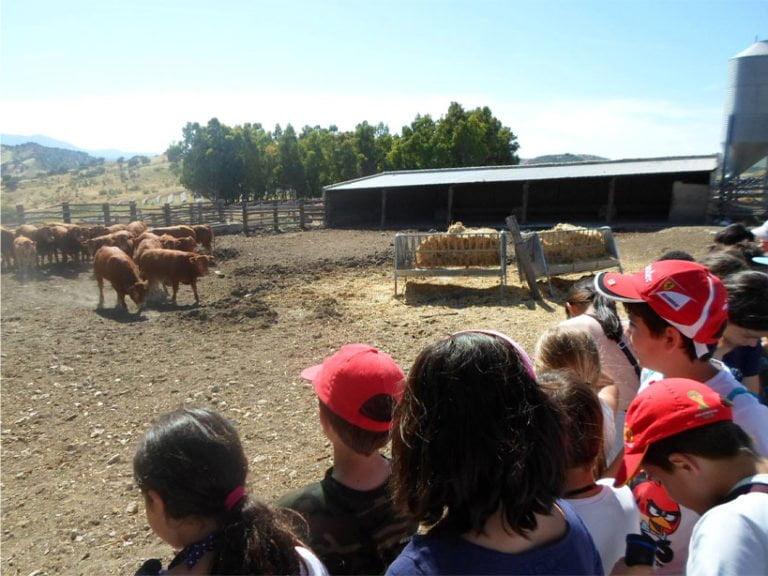 camping pueblo blanco granja escuela 768x576 - CAMPING PUEBLO BLANCO