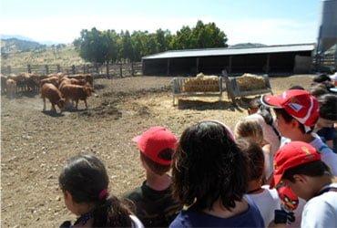 camping puente granja escuela - CAMPING PUEBLO BLANCO